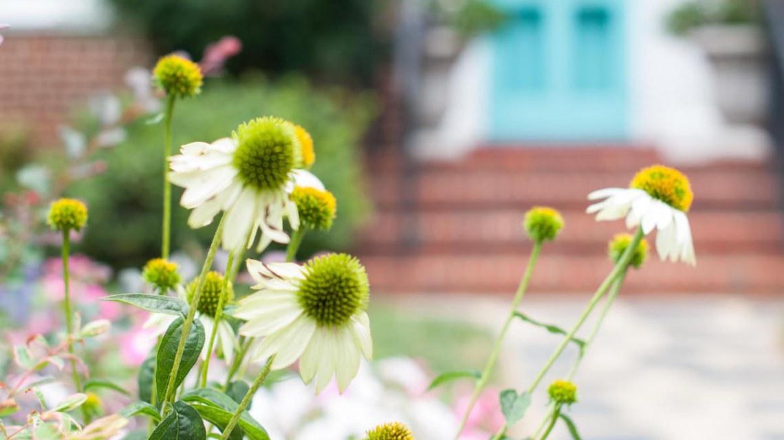 spring-photo.jpg